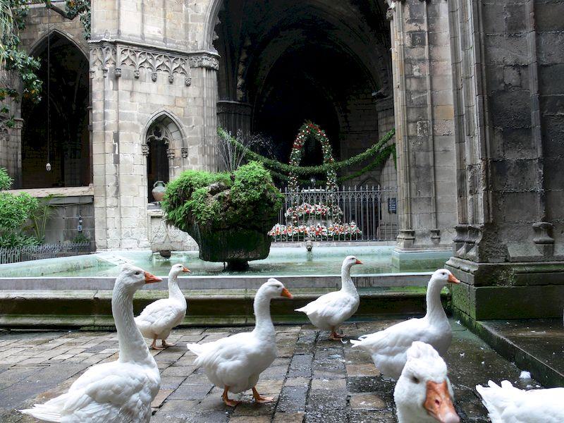 OCB16_la_catedral_11