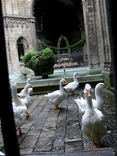 OCB16_la_catedral_12